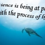 Decision-Making and the Change Process – the Power of Patience